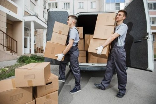 Free Collections and Removals